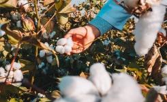 7 motivos para escolher a roupa de algodão para bebês e crianças